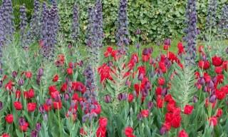 Blumenzwiebelmischung_710x315