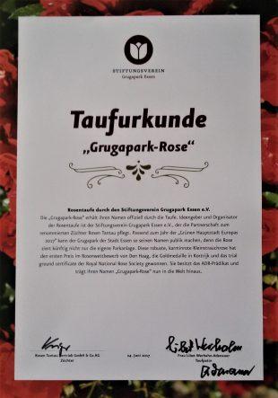 Die Taufurkunde der Grugapark-Rose