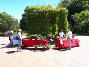 Bei strahlendem Sonnenschein informieren sich Besucher über den Stiftungsverein und die Grugapark-Rose<br /> Copyright: Rolf Mücke, Grugapark