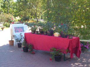 Stand des Stiftungsvereins mit der Grugapark-Rose vor dem Rosenzimmer im Rosengarten<br /> <br />