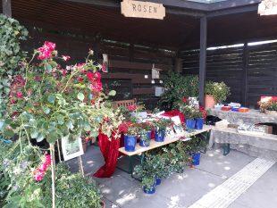 Stand des Stiftungsvereins Grugapark